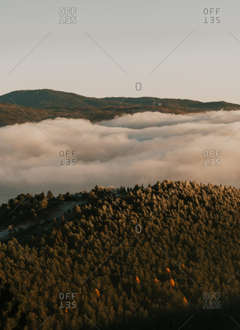 Low lying clouds over forest covering rolling hills