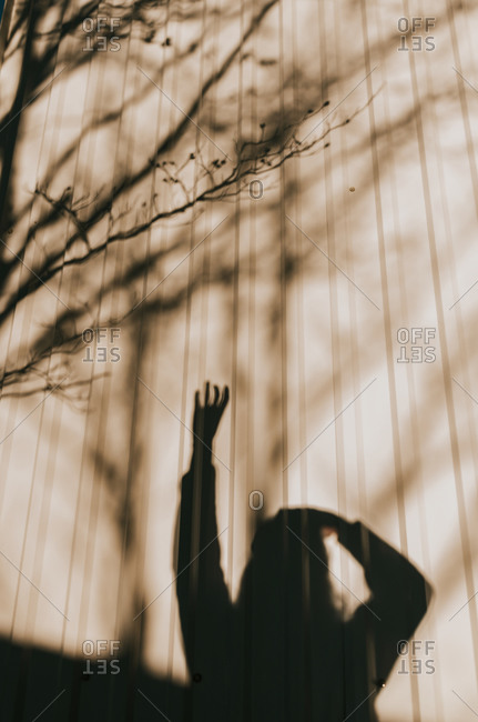 Shadow of woman reaching up to a tree
