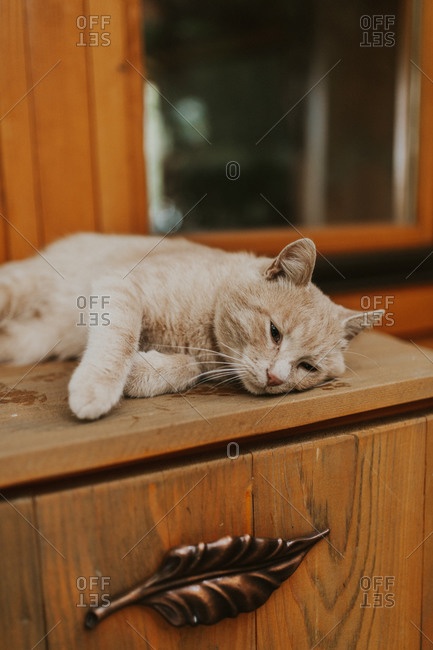 Cat resting outside of a wooden treehouse