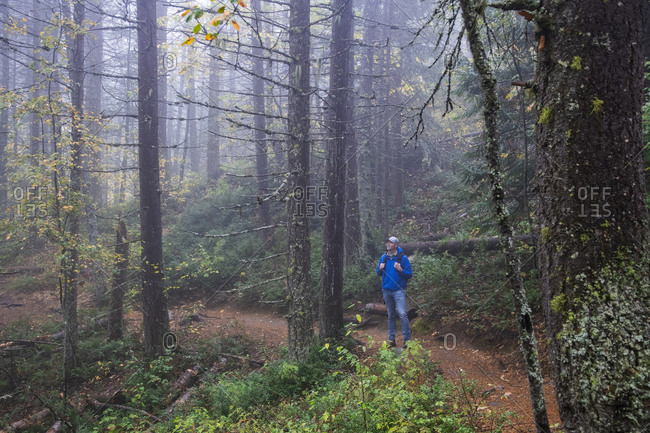 A hiker pauses to enjoy the view on a foggy day in a forest of Rossland, British Columbia