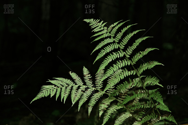 Ferns stand out against the black of a forest in Nelson, British Columbia