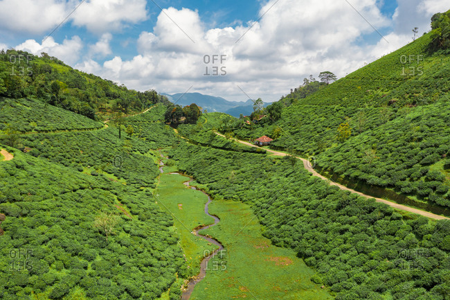 Aerial view of tea plantations, Kerala, India.