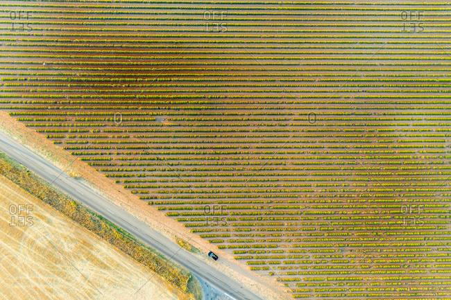 Aerial view of the lavender fields, Verdon, Provence, France.