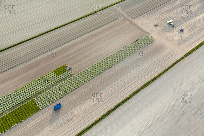 Aerial view of planting, Manche, Normandy