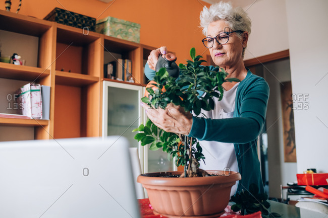 Woman caring for bonsai plant