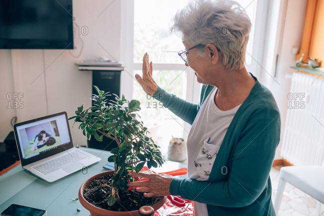 Woman on video call whilst caring for bonsai
