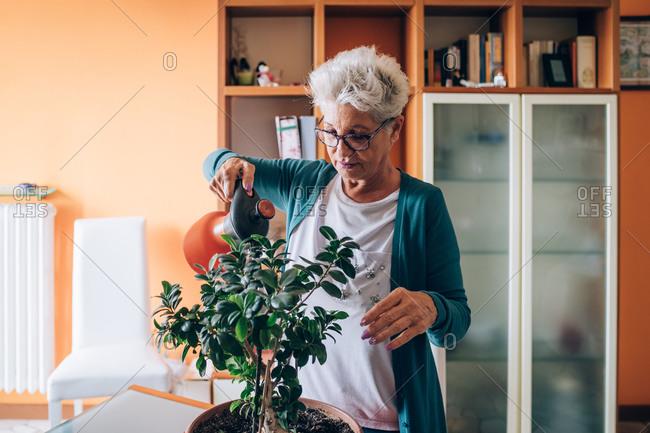 Woman caring for bonsai tree