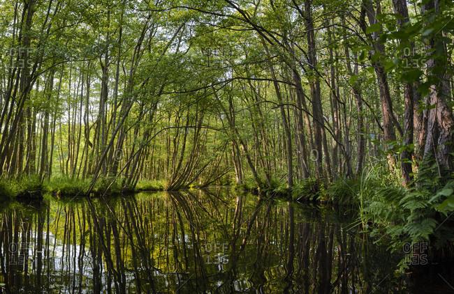 Germany, Mecklenburg-West Pomerania, river, floodplain forest, reflection