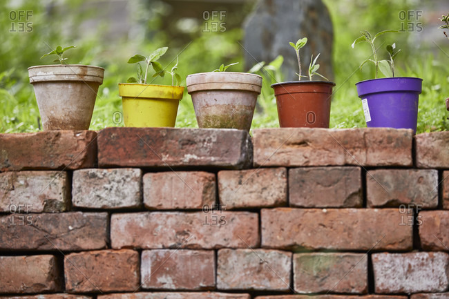 Five flower pots on brick wall