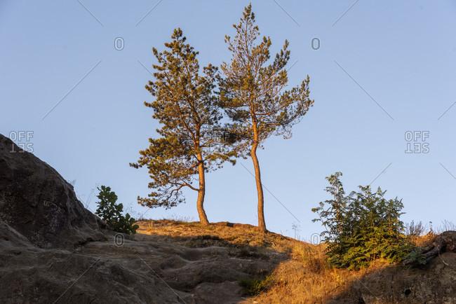 Germany, Saxony-Anhalt, Timmenrode, pines, Hamburg coat of arms, Teufelsmauer, sunrise, Harz, UNESCO Global Geopark