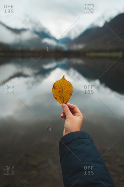 Female hand holding a yellow fallen leave in Loudenvielle Lake, Pyrenees