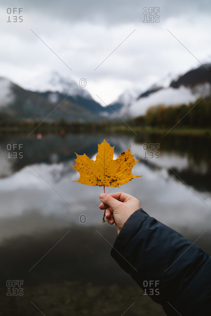 Caucasian girls hand holding a yellow maple leave with blurry lake and mountains in the background