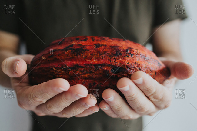 Man holding forward a red cacao pod sideways with both hands