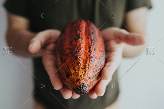 Horizontal photograph of a man holing a red cacao pod with both hands