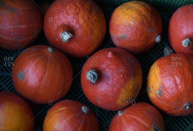 Abundance of Hokkaido pumpkins close up