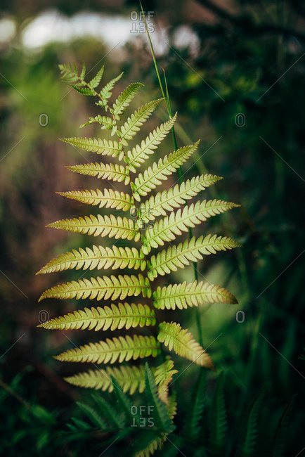 Close up of wild ferns growing by a pond