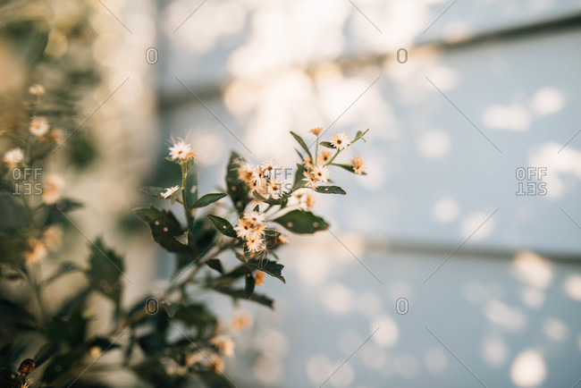 Small flowers blooming in dappled light