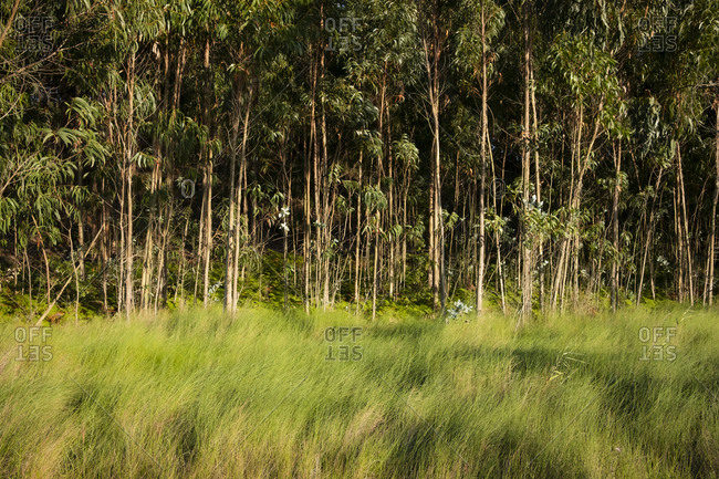 Landscape along Passadicos Ria de Aveiro with trees and tall grass, Aveiro, Portugal