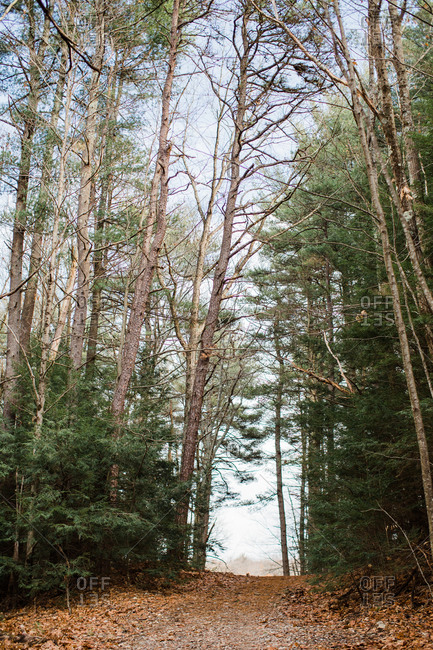 Trail between trees in a forest in rural Connecticut