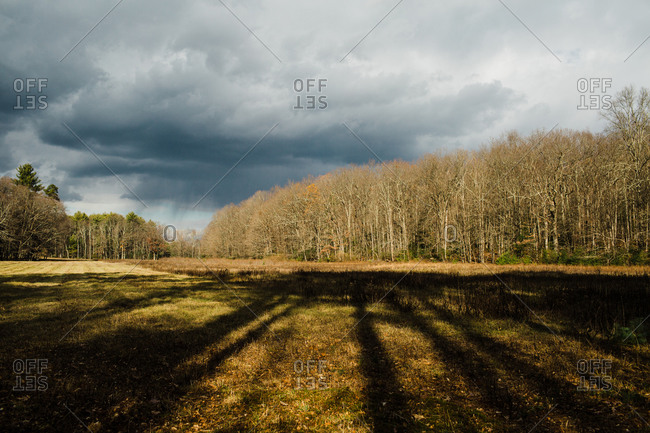 Trees in a forest casting shadows on a field in the Mclean Game Refugee in Connecticut
