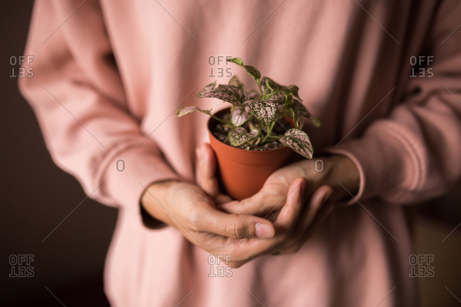 Woman holding a hypoestes pink polka dot plant
