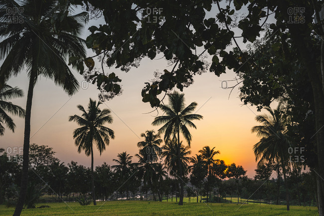 Silhouette of palm trees at dusk after sunset close to rice fields in Hampi Island, India, Karnataka