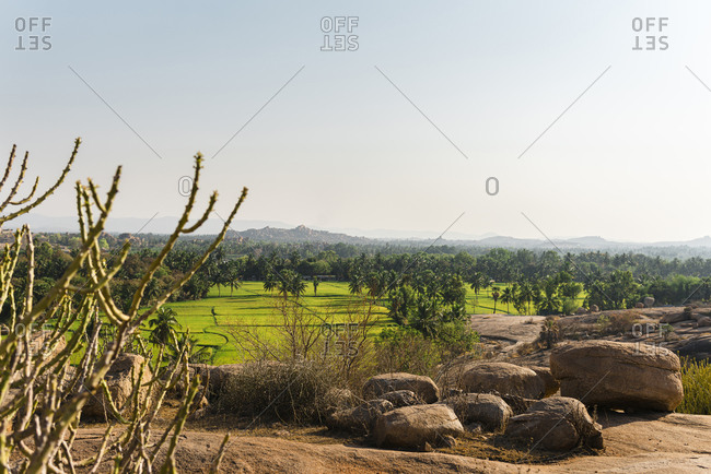 Green rice farmland at sunset with palm trees and granite rocks in foreground in Hampi Island, Karnataka, India