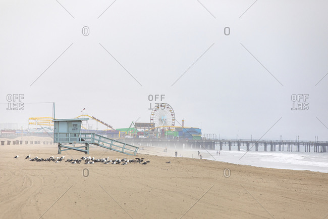 Santa Monica, California - July 22, 2020: Birds on beach surrounding a lifeguard post with the Santa Monica Pier in the background