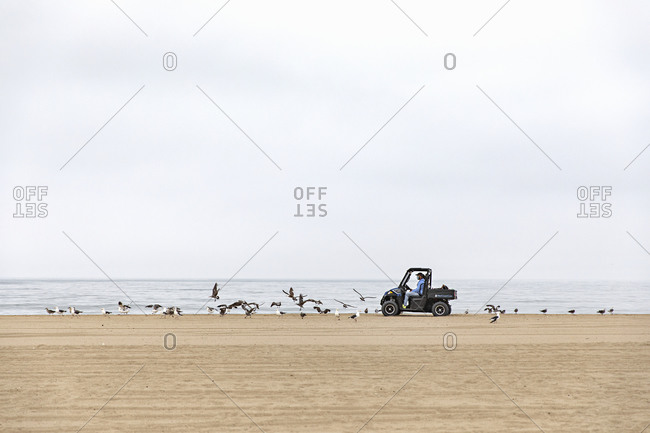 Santa Monica, California - July 22, 2020: Worker driving a small utility vehicle with seagulls flocking around on the Santa Monica Beach on a cloudy day