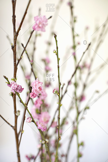 Pink flowers blooming on branches