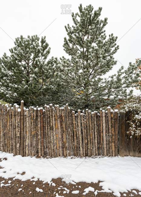 Snow Covered Trees and Wooden Fence in New Mexico