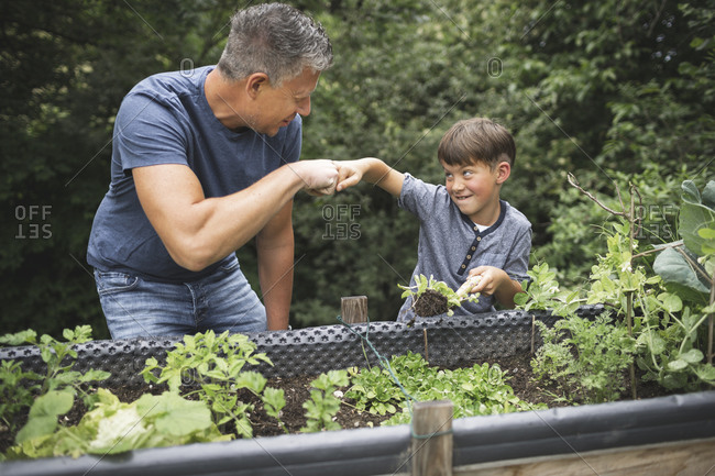 Happy boy giving fist bump to father while holding plant with trowel by raised bed in garden
