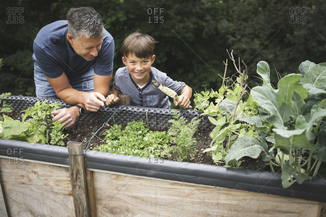 Smiling boy learning gardening from father while leaning on raised bed at garden