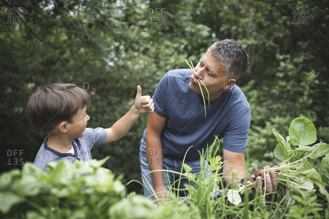 Boy showing thumbs up to playful father while harvesting vegetables at garden