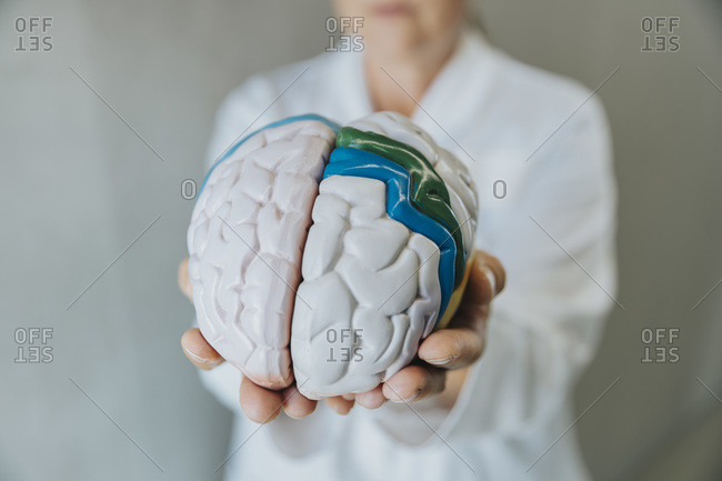 Female scientist showing artificial human brain while standing at clinic