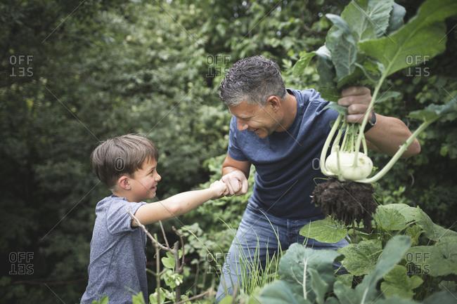 Smiling man holding kohlrabi while giving fist bump to son in garden