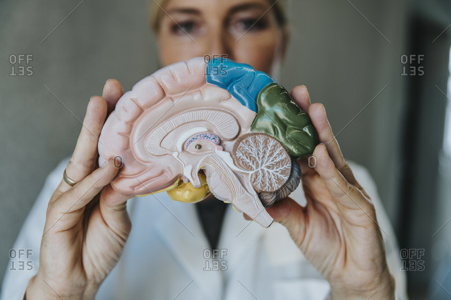 Scientist showing artificial internal organ while standing at clinic