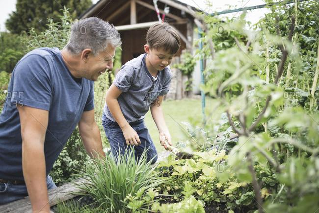 Mature man looking at son gardening raised bed at back yard