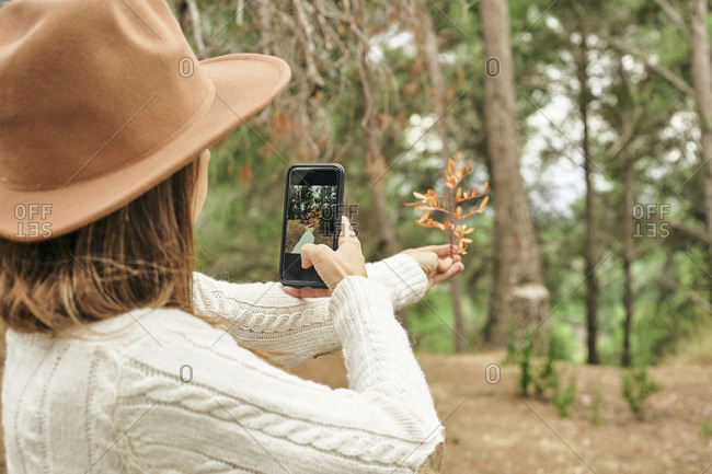 Woman photographing Pistacia Lentiscus leaves in forest