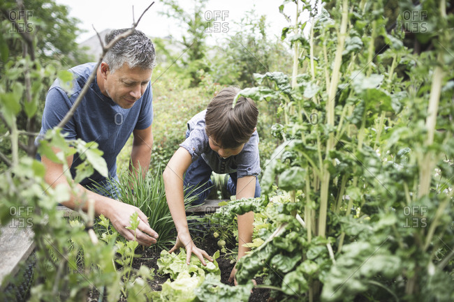 Father looking at son gardening raised bed at back yard