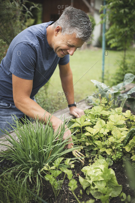 Smiling mature man planting on raised bed at back yard