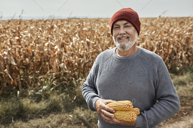 Smiling farmer collecting corn while standing at farm