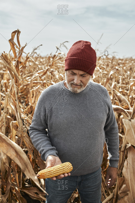 Man holding corn while standing at corn farm