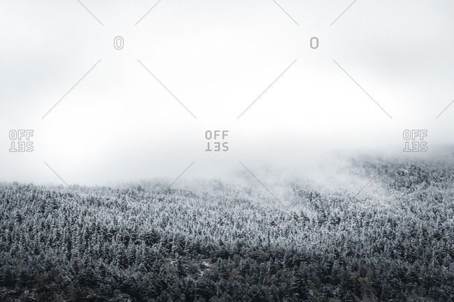 Winter forest shrouded in low clouds