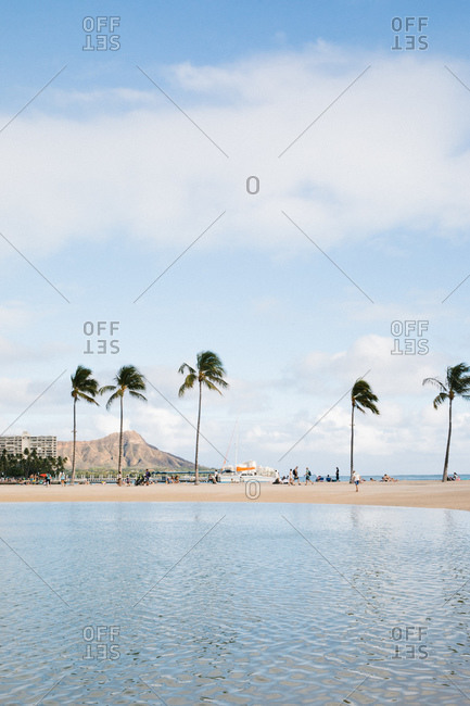 Tourists on beach with palm trees and tall buildings in the distance, Honolulu, Oahu, Hawaii