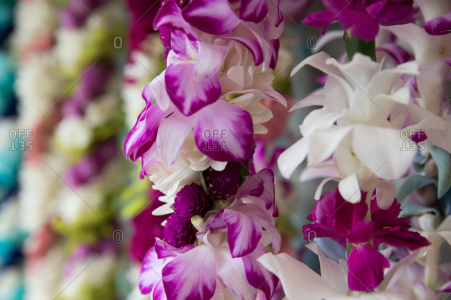 Close up of pink and white orchid leis