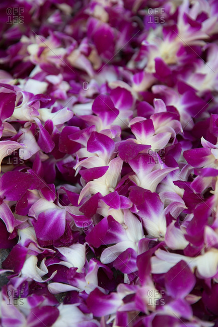Pink and white orchid leis close up
