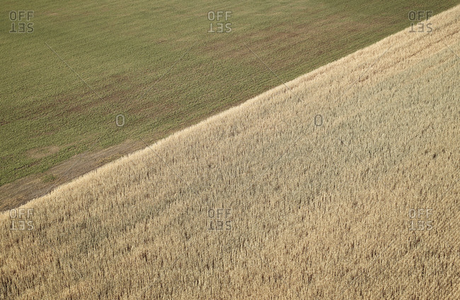 Aerial view of edge of wheat field