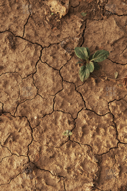 Dry cracked soil caused by a drought