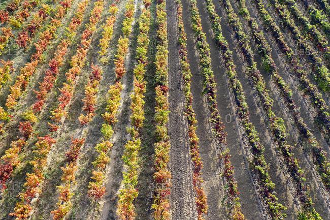 Full frame shot of vineyard on sunny day